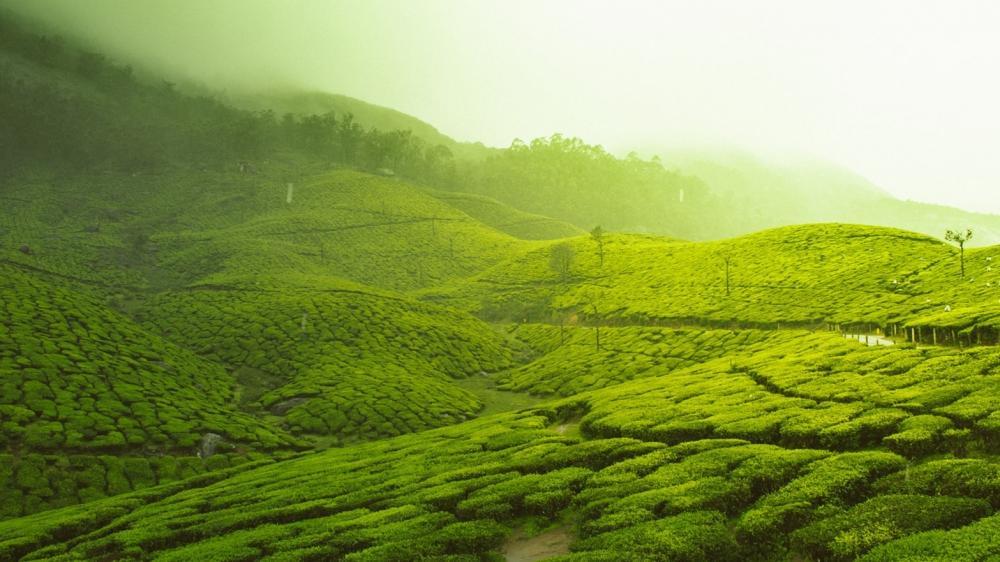 Top highlights of Sri Lanka