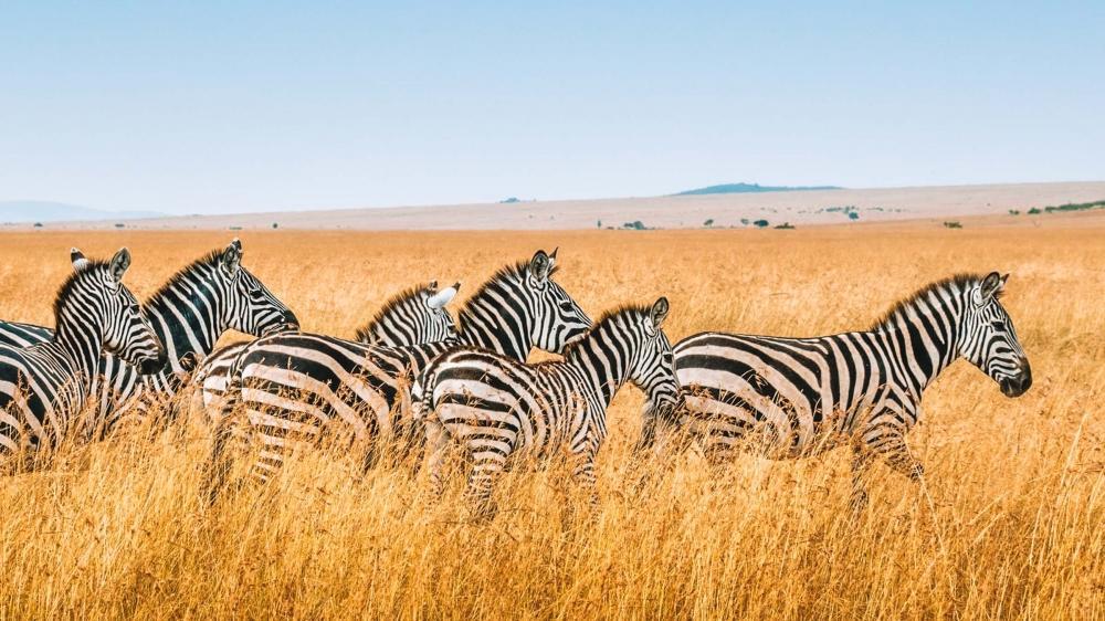 Top Highlights of Kenya