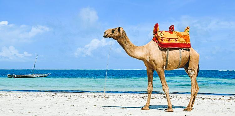 Kenya, an upcoming exquisite destination for the Halal Traveler